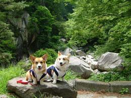 昇仙峡は緑いっぱいスペシャル♪